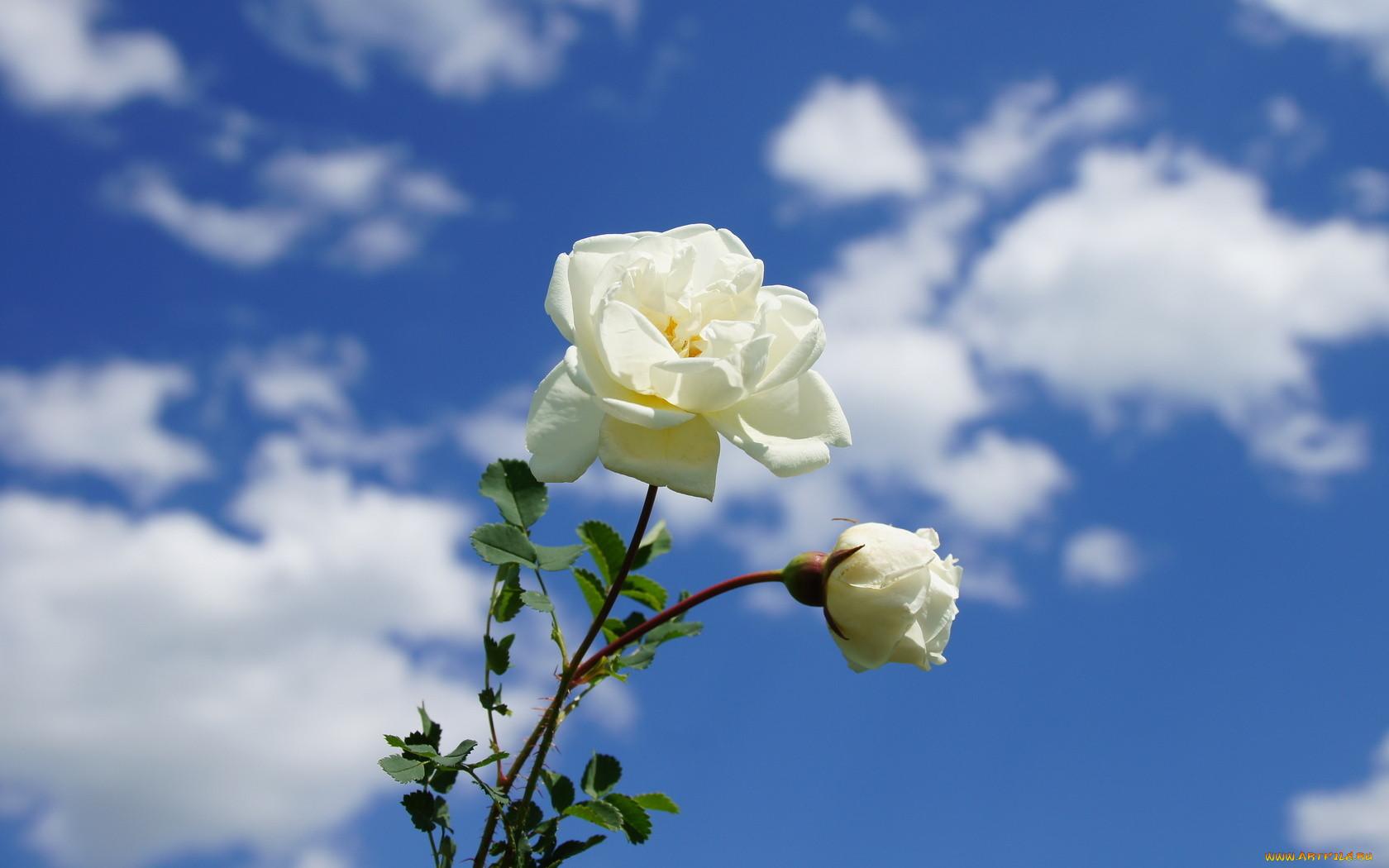 Красивые картинки живые цветы гифки фотографию нашими